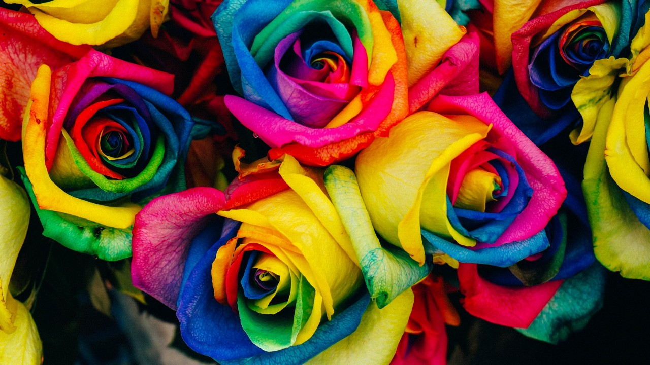roses, colorful, rainbow wallpapers