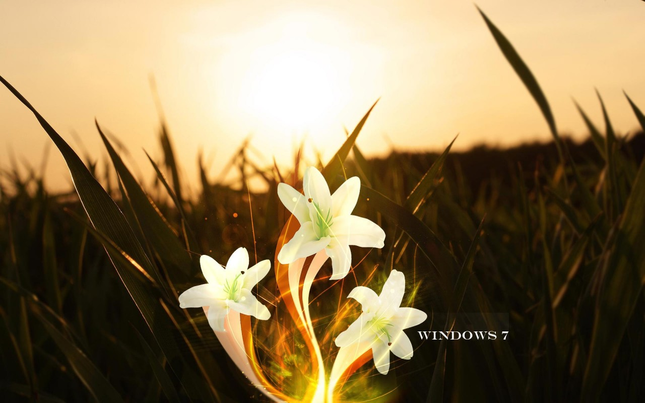 Free Windows 7, lily, magic wallpapers