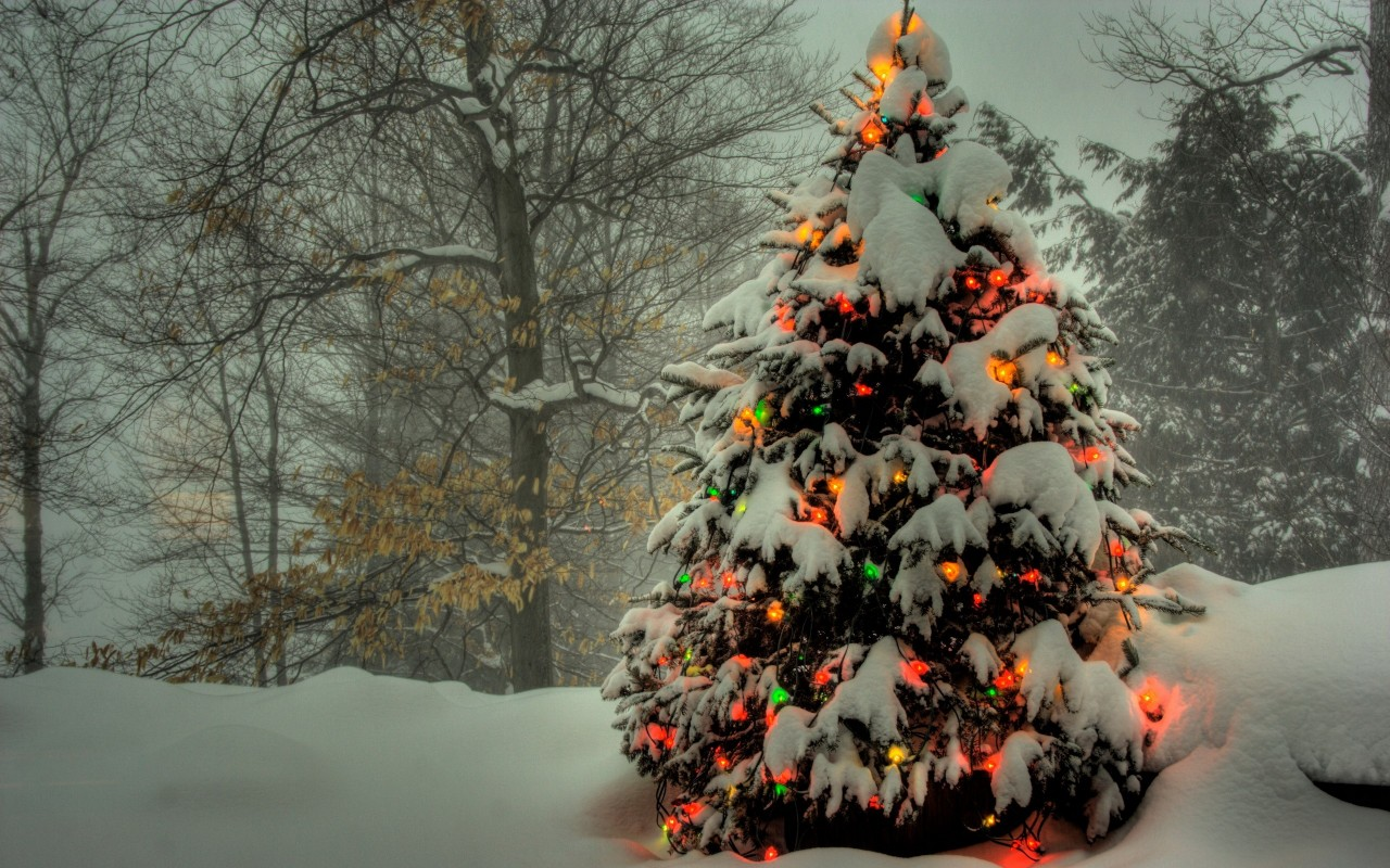 Christmas Tree  trees, funny wallpapers
