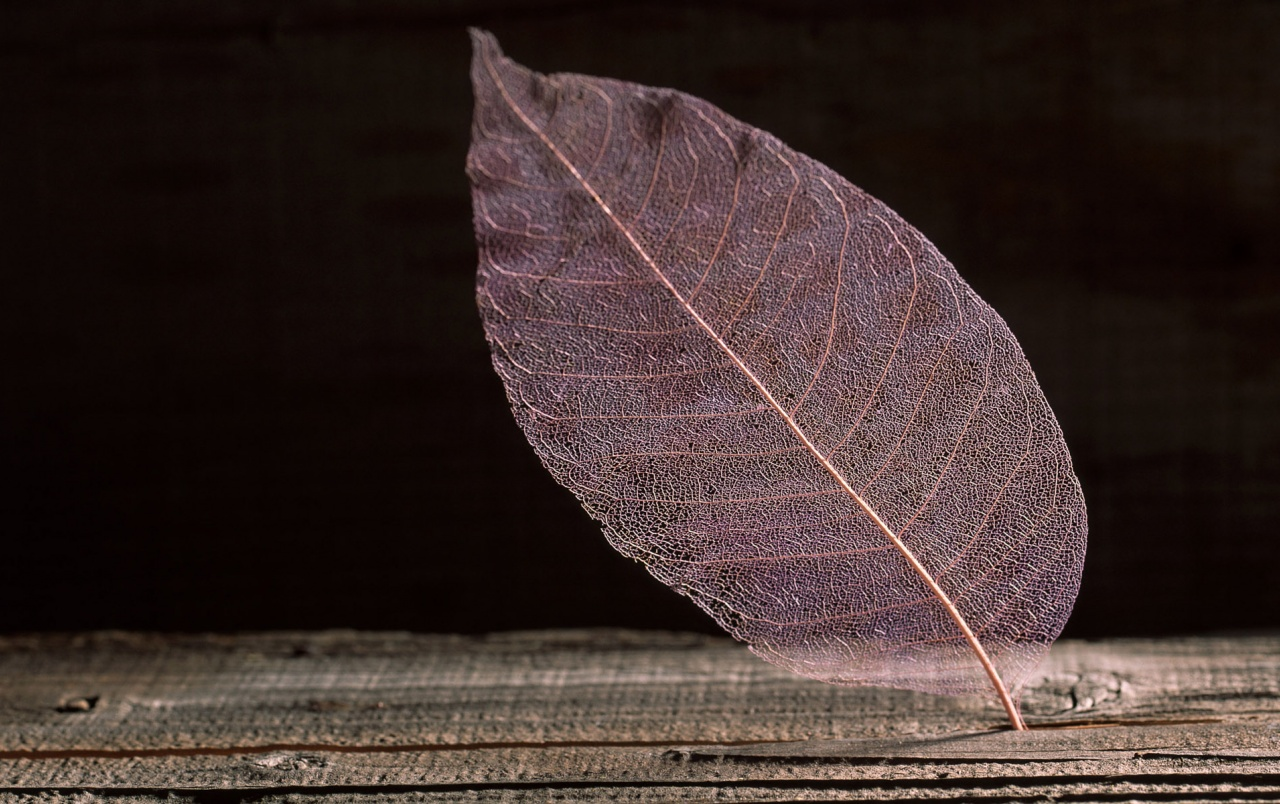 Transparent Leaf wallpapers