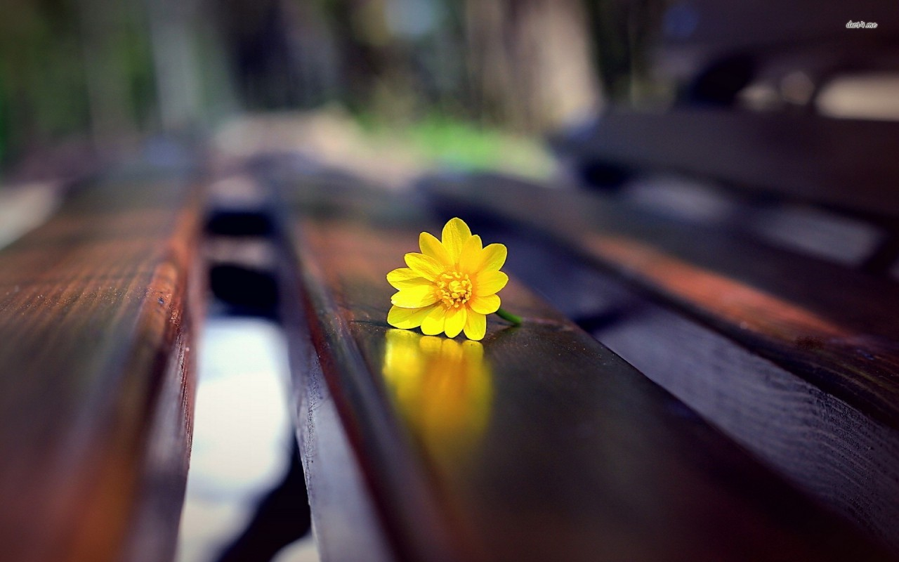 Small yellow flower on the bench, floral, photography wallpapers
