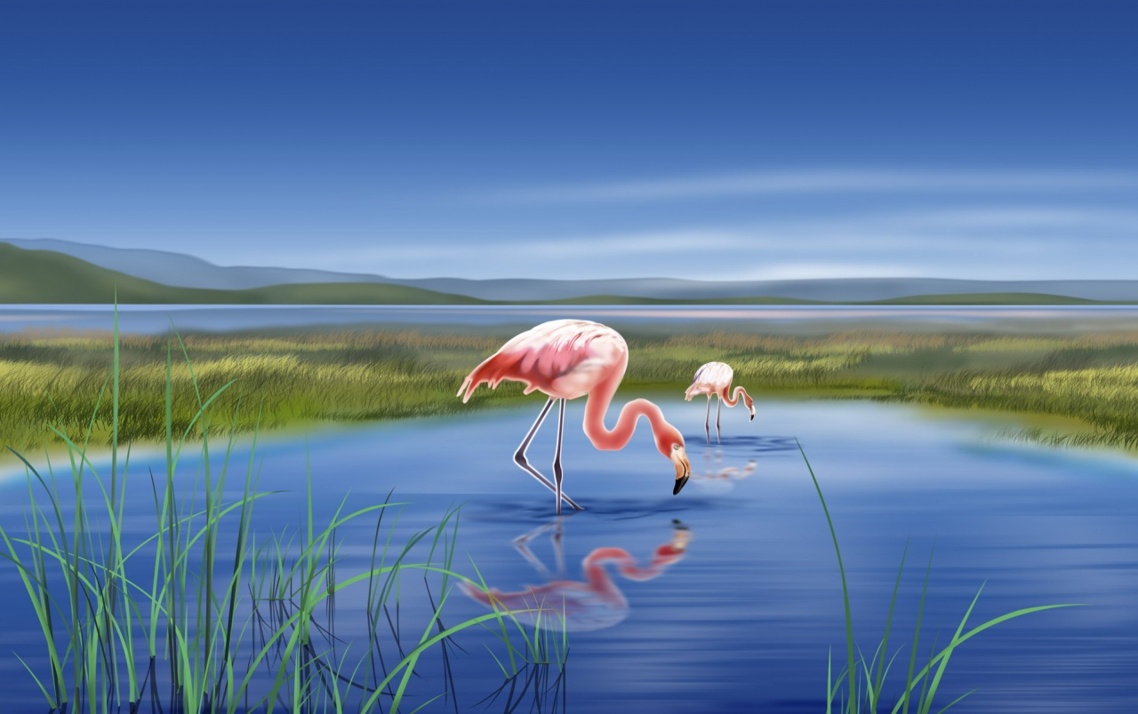 Flamingos wallpapers