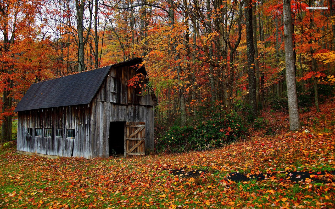 Abandoned forest cabin in the autumn, tree, nature wallpapers