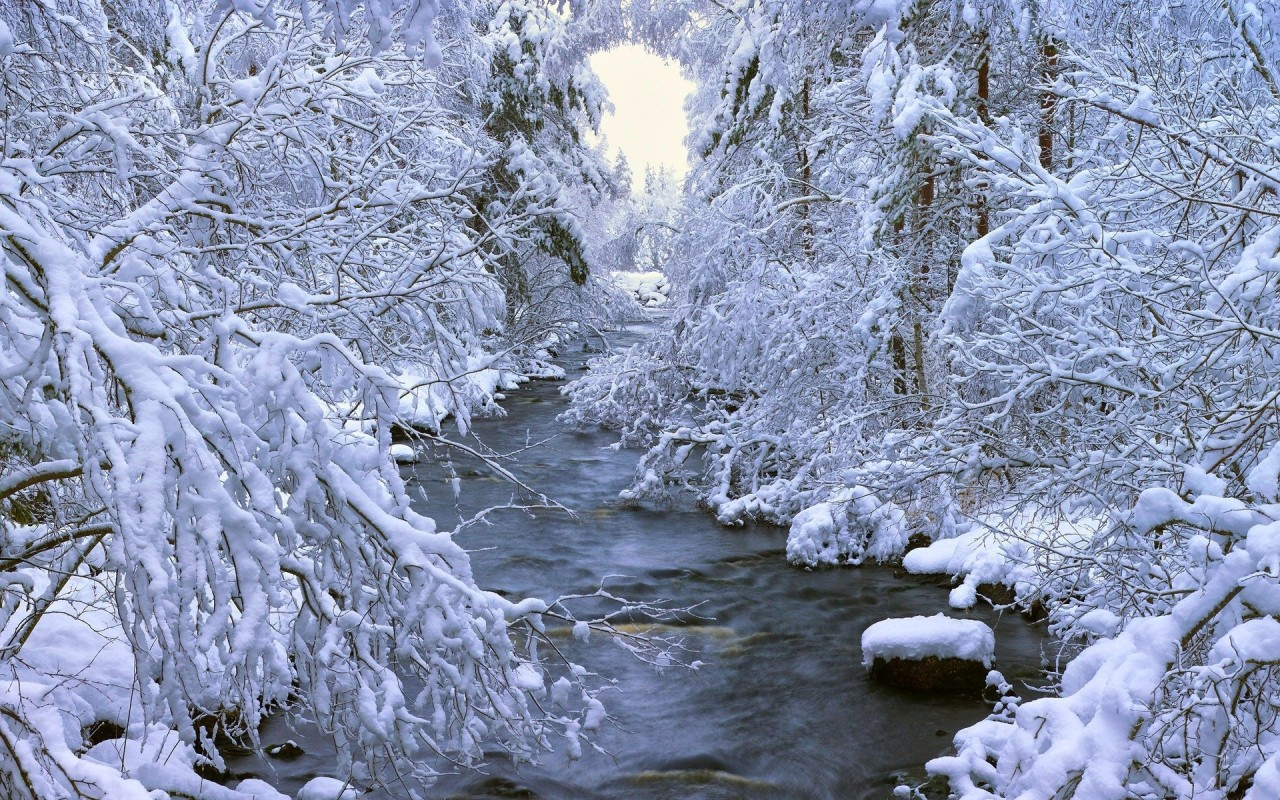 The stream in winter, tree, nature wallpapers