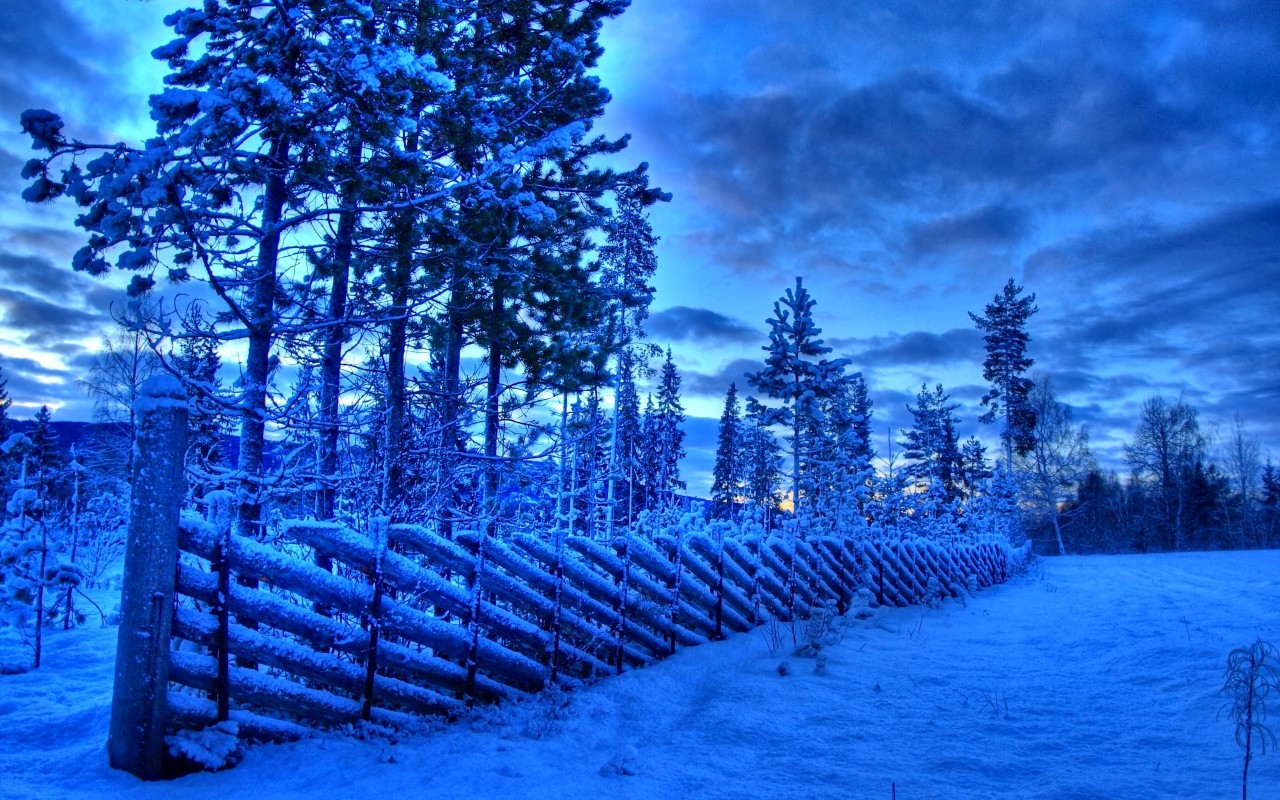 Frozen fence, snow, winter, tree, sky, cloud, nature wallpapers
