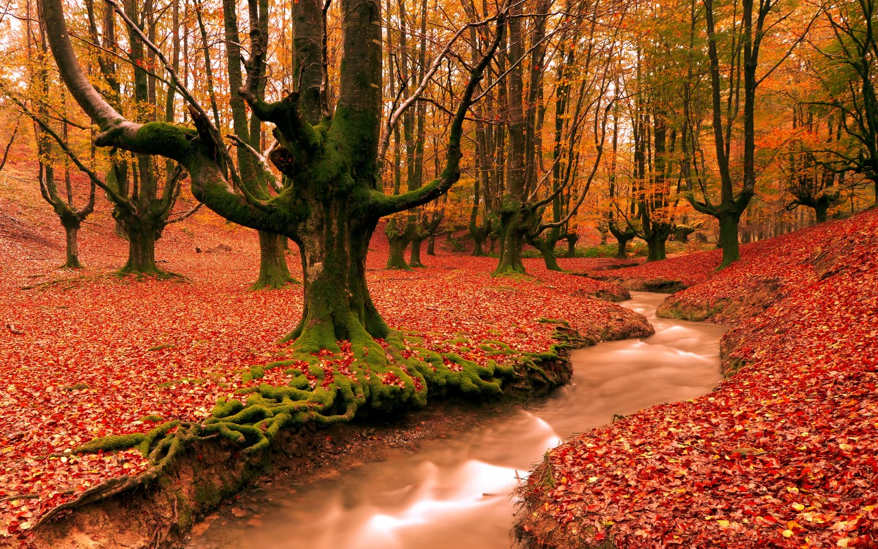 Red Forest,  autumn, nature wallpapers