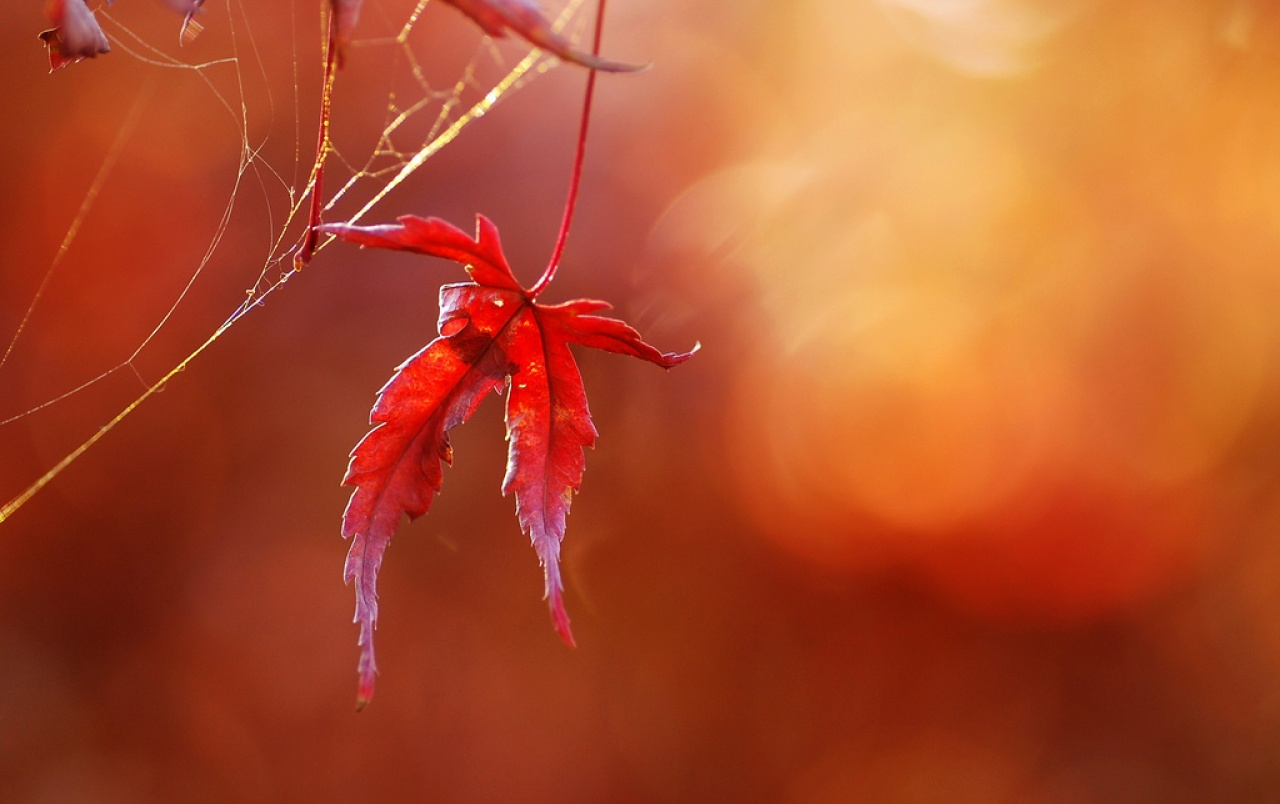 Red Nature wallpapers | Red Nature stock photos