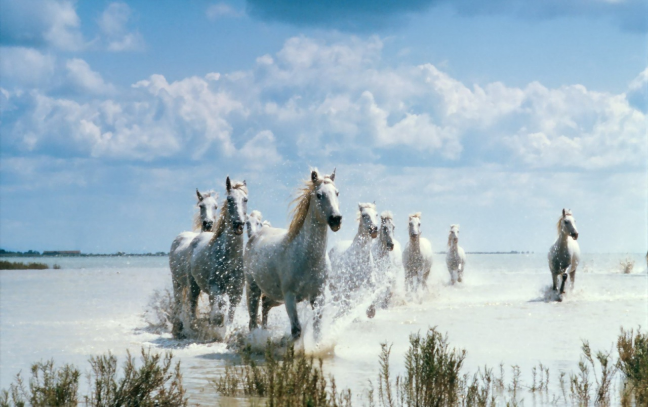 White Horses wallpapers