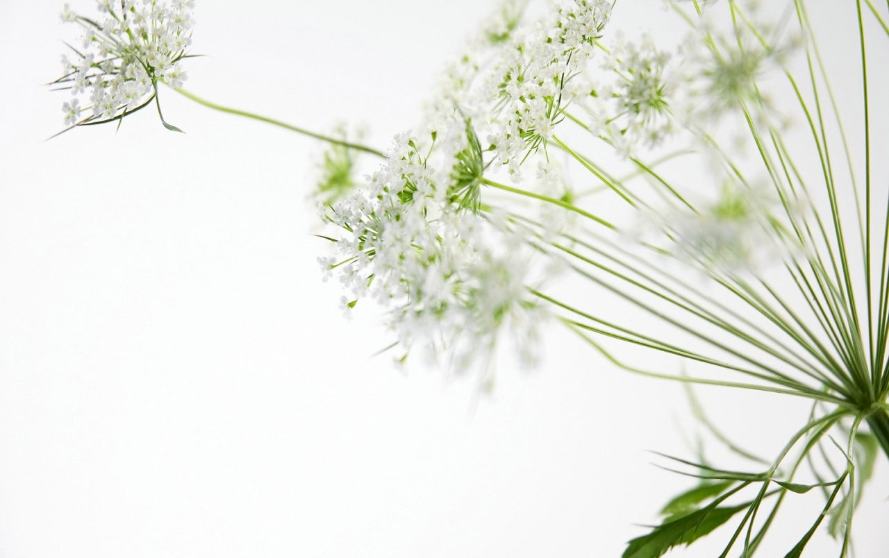 Beautiful White Flowers Wallpaper for PC Full HD