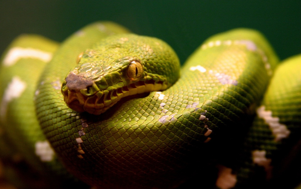 Green snake wallpapers