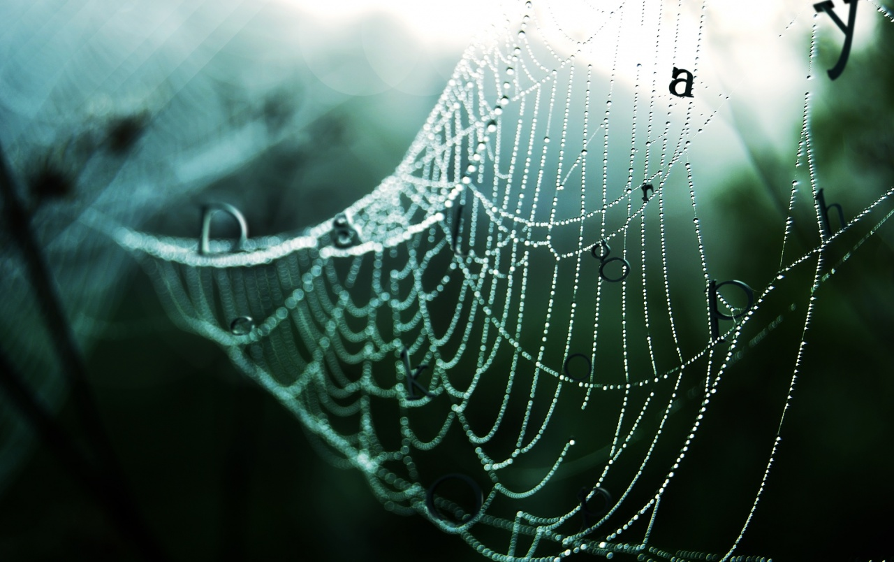 Wet spider web wallpapers