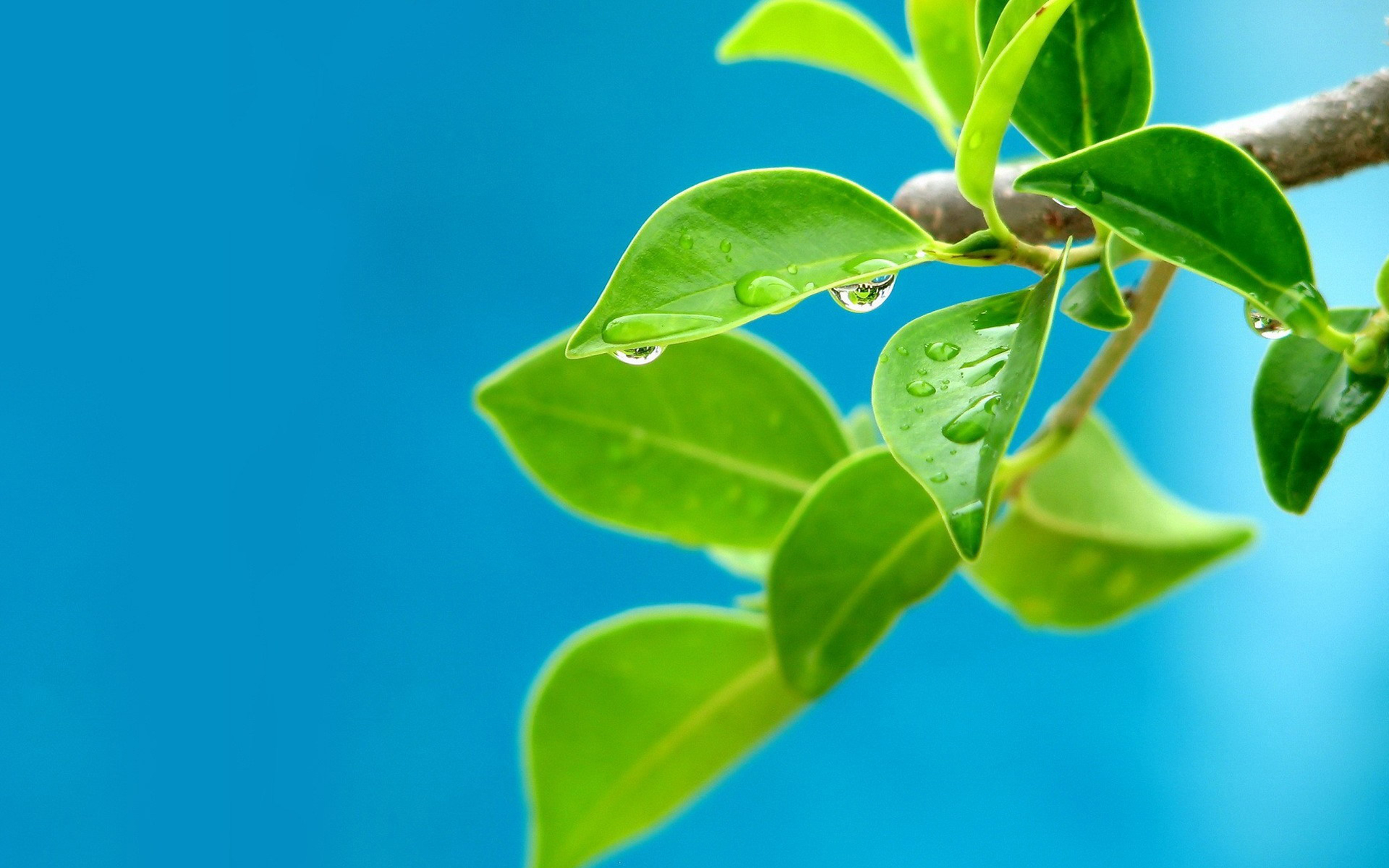 Water drops on leaves wallpapers | Water drops on leaves ...