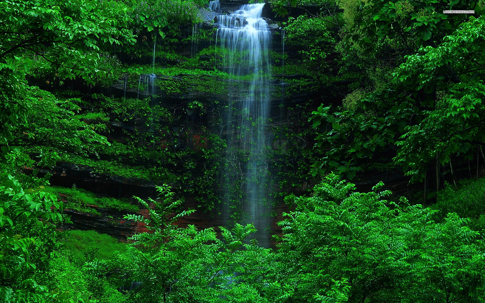 Waterfall Grass Green Forest Wallpapers