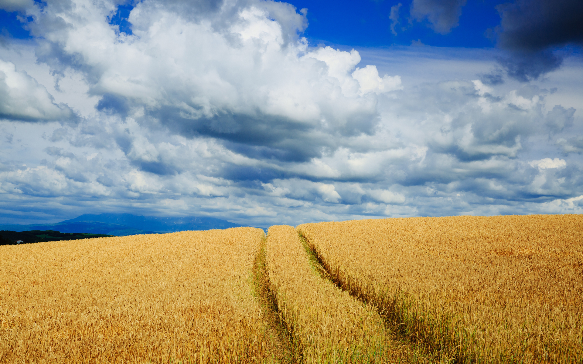1920x1200 Wheat Field & Nice Clouds
