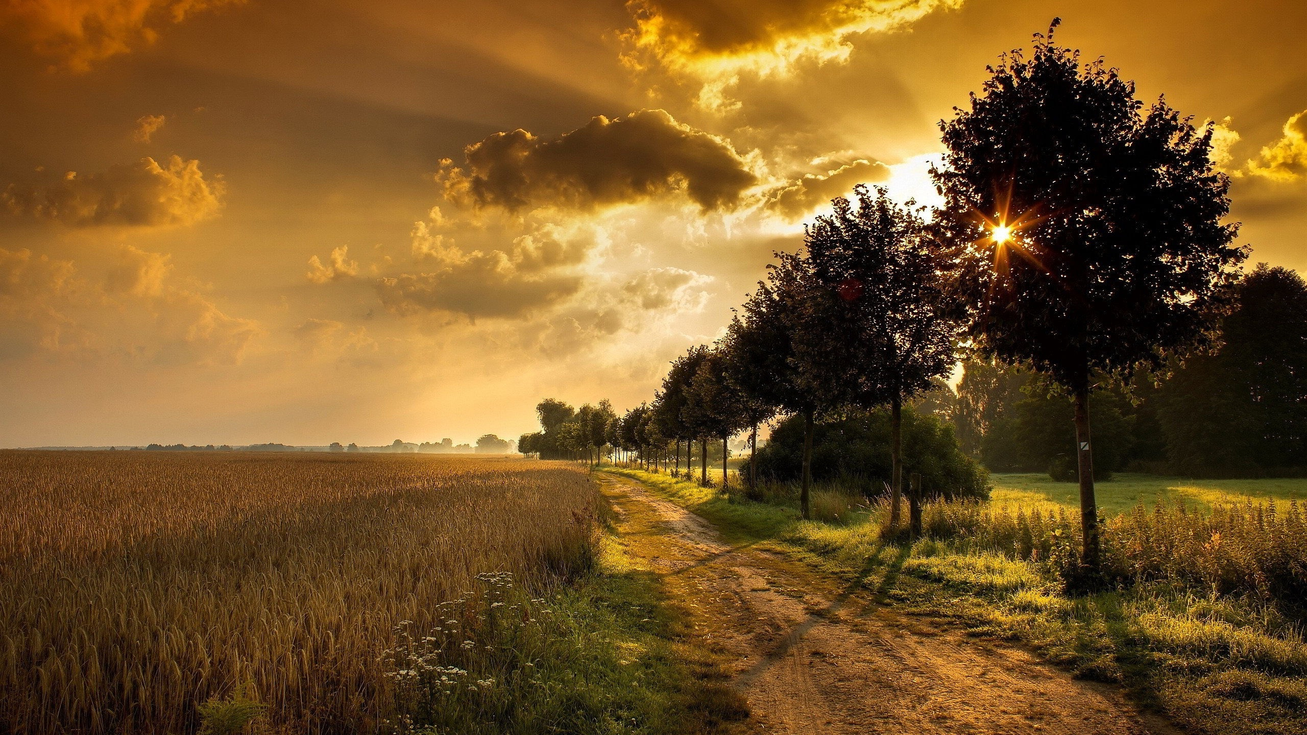 Download Vivo X7 Stock Hd Wallpapers: 2560x1440 Wheat Field Path Trees Sunset Desktop PC And Mac