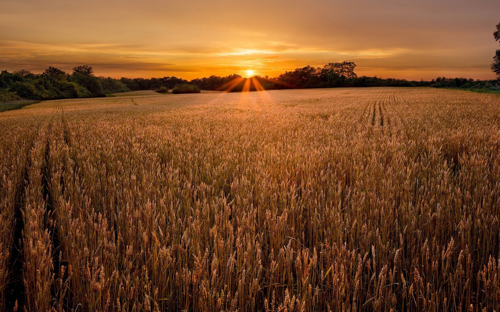 Wheat Field Sunset Forest Wallpapers Wheat Field Sunset