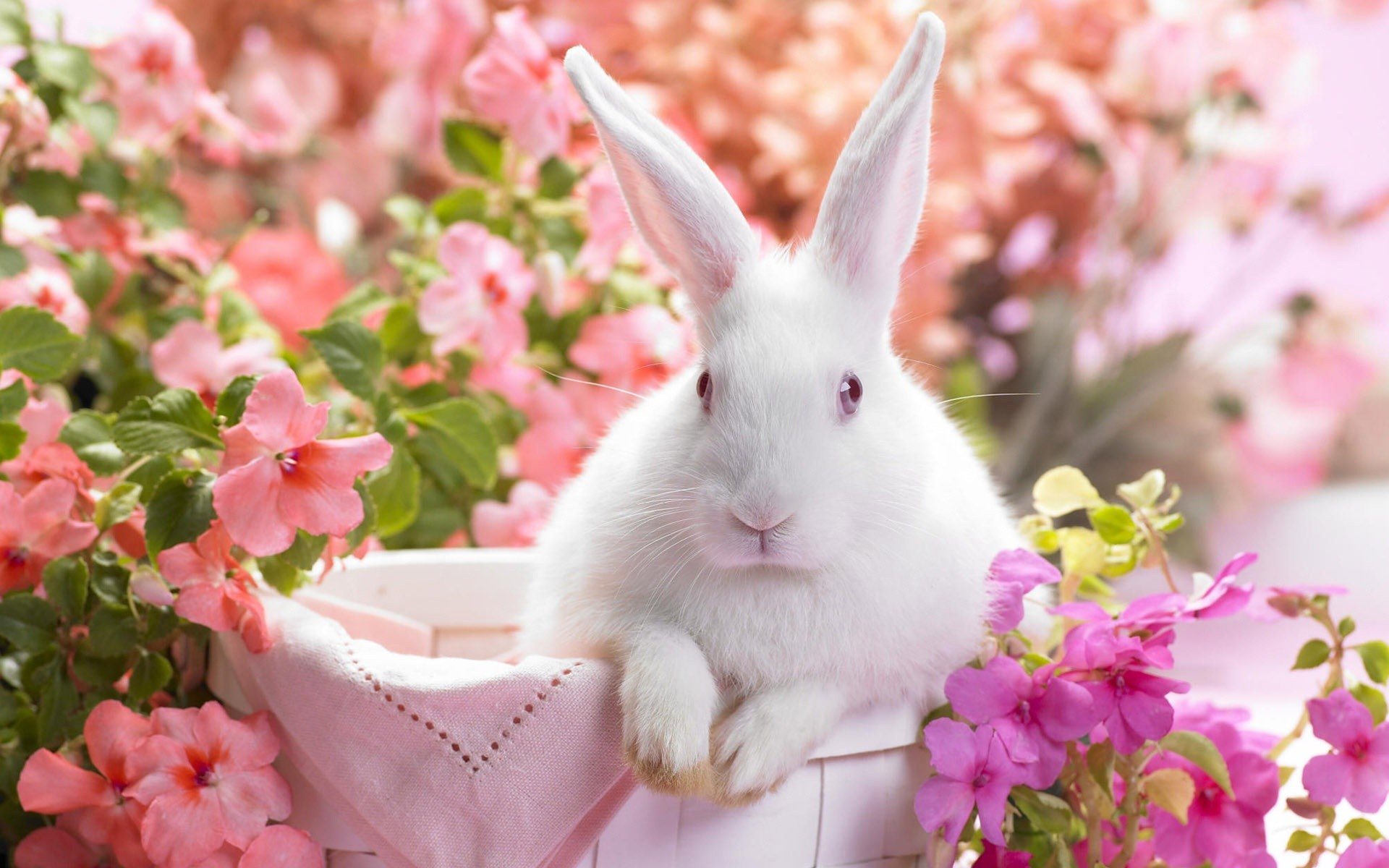 White Easter Bunny Wallpapers White Easter Bunny Stock Photos