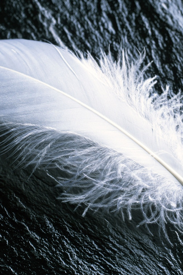 fallen feather mac wallpaper - photo #41