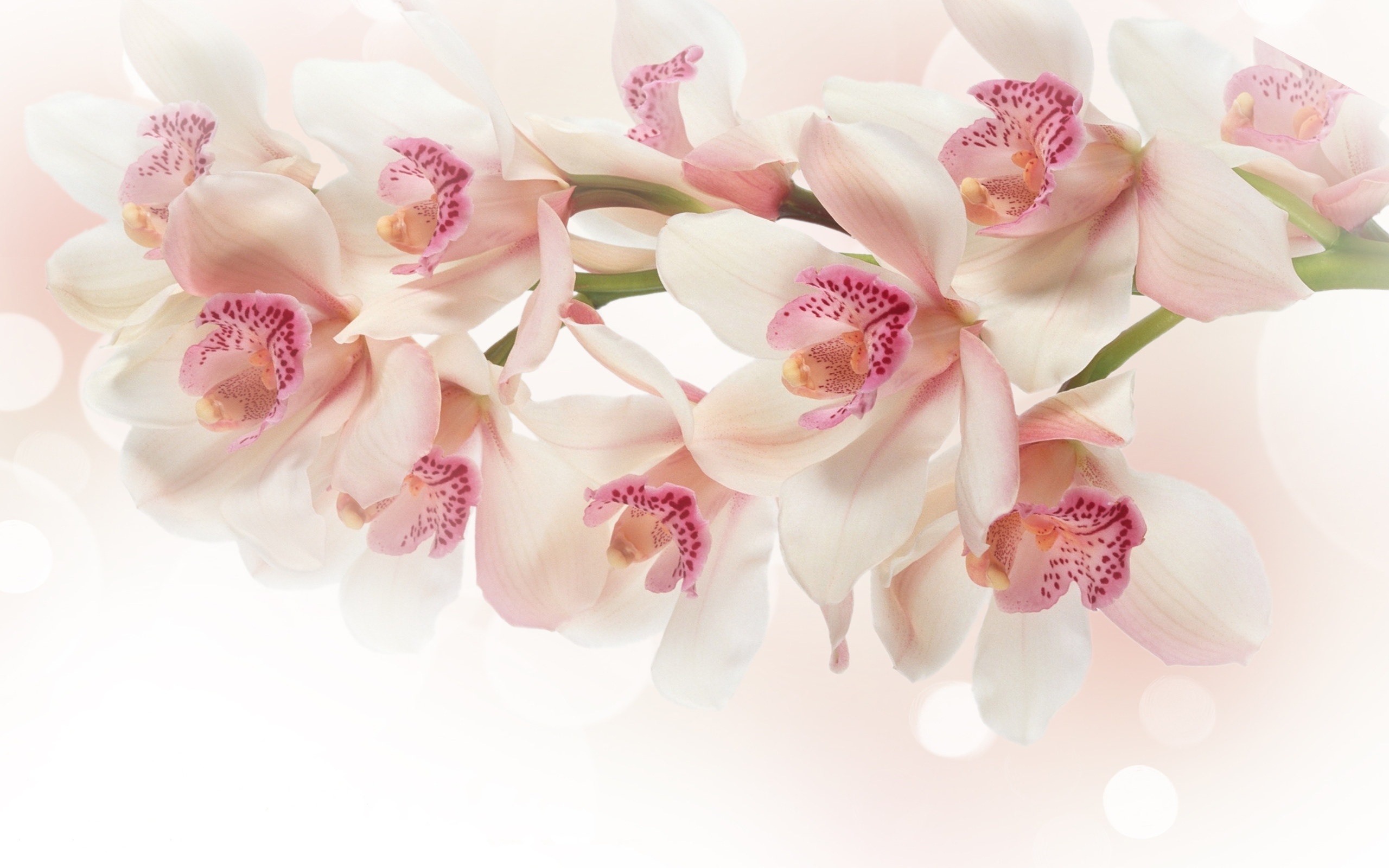 White orchid flowers wallpapers white orchid flowers for 3d white flower wallpaper