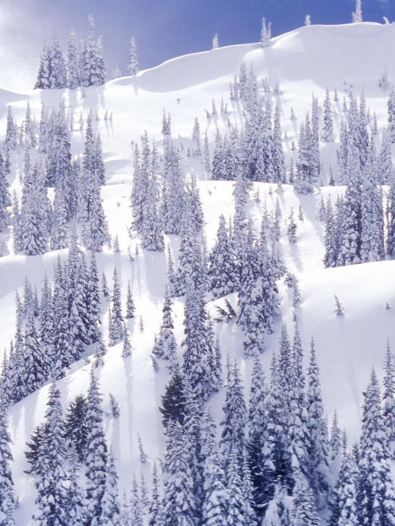 768x1024 white winter park ipad mini wallpaper