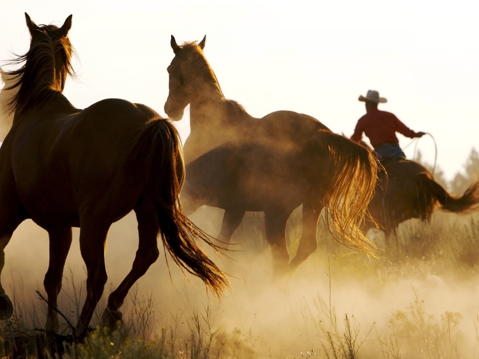 Cowgirls and horses wallpaper - photo#14