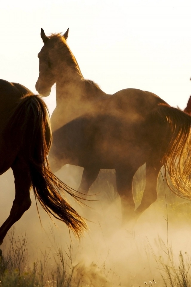 640x960 Wild Horses And Cowboy Iphone 4 Wallpaper