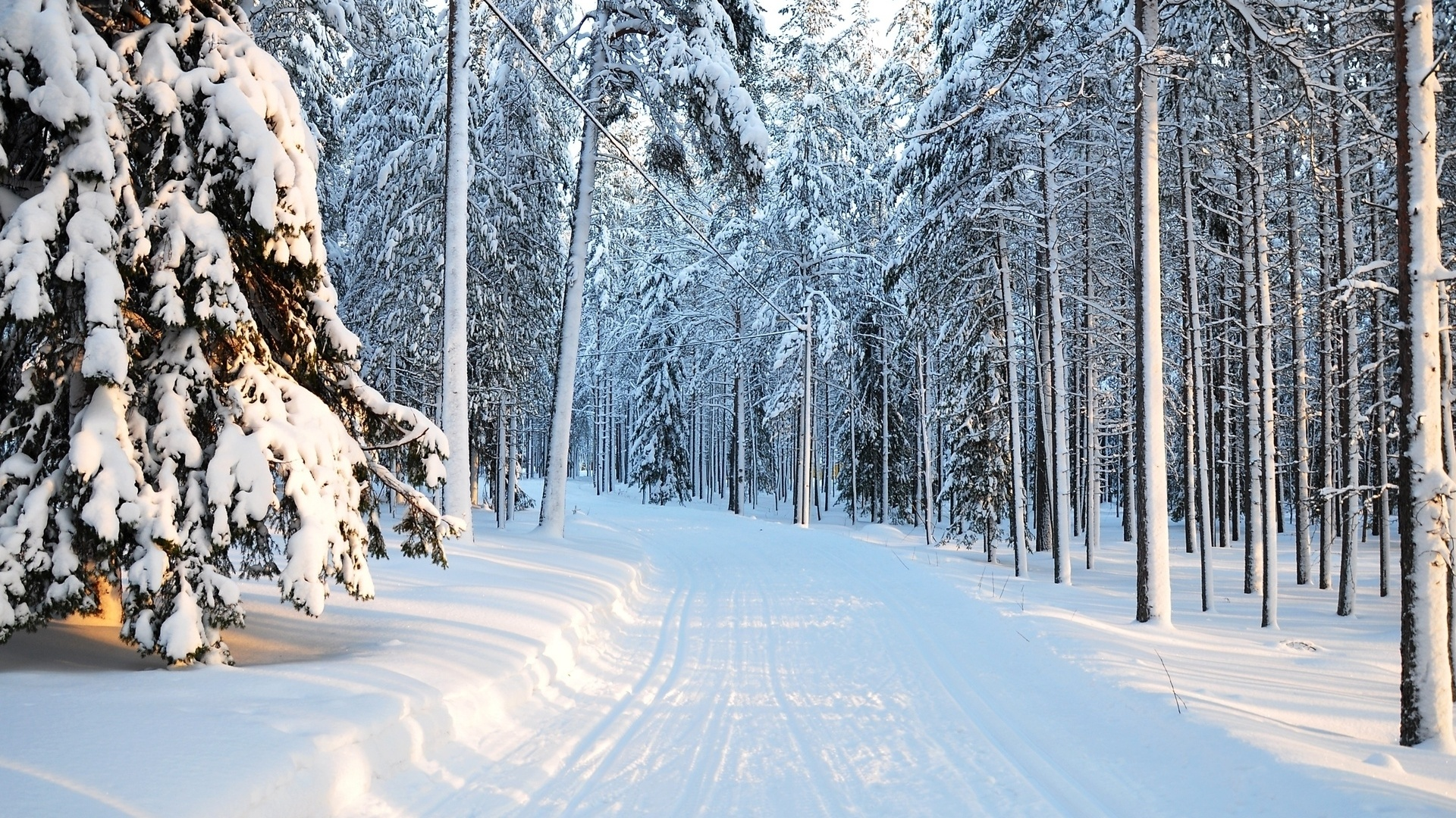 1920x1080 Winter Tree Snow Forest Nature Desktop Pc And