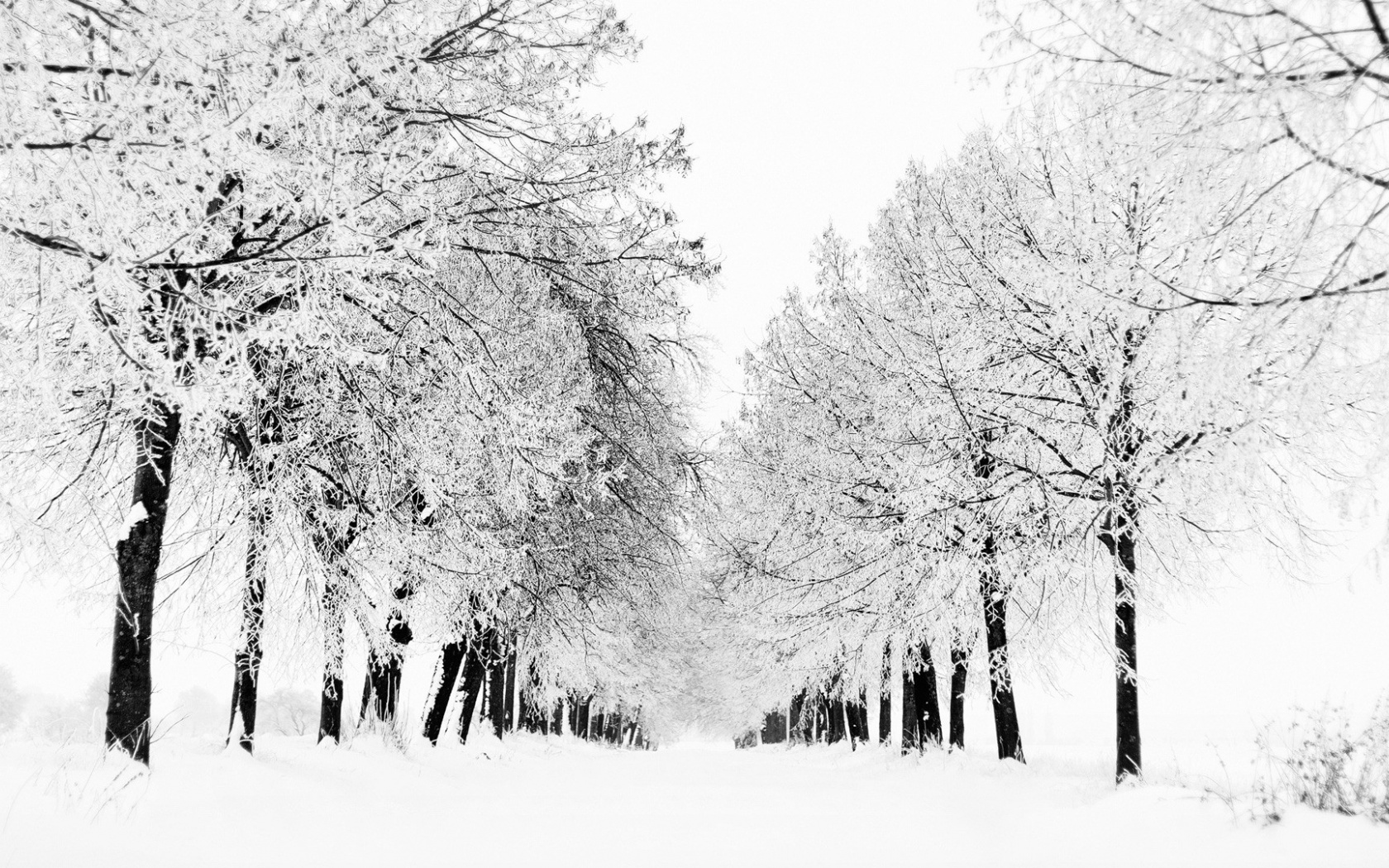 1500x500 Winter Avenue Snow Trees Twitter Header Photo