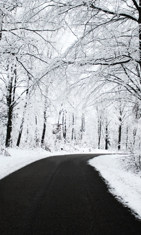 480x800 Winter Forest & Road