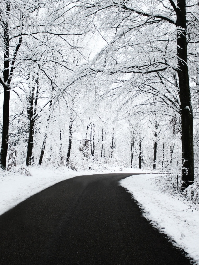 768x1024 Winter Forest & Road