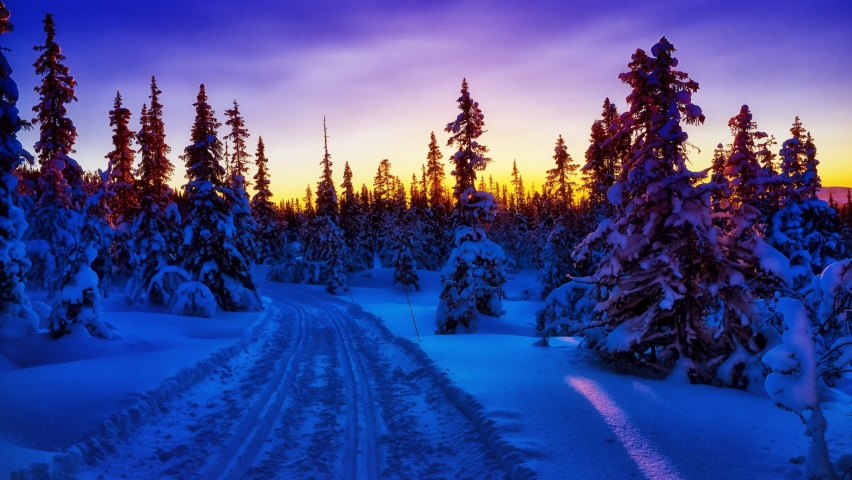825x315 Winter Forest Snow Road Sunset Facebook Cover Photo