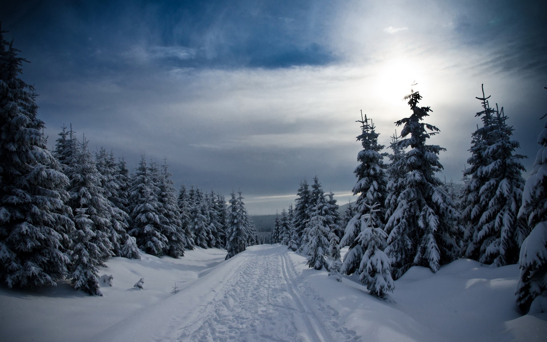 Winter Forest Snowy Path Sky Wallpapers Winter Forest