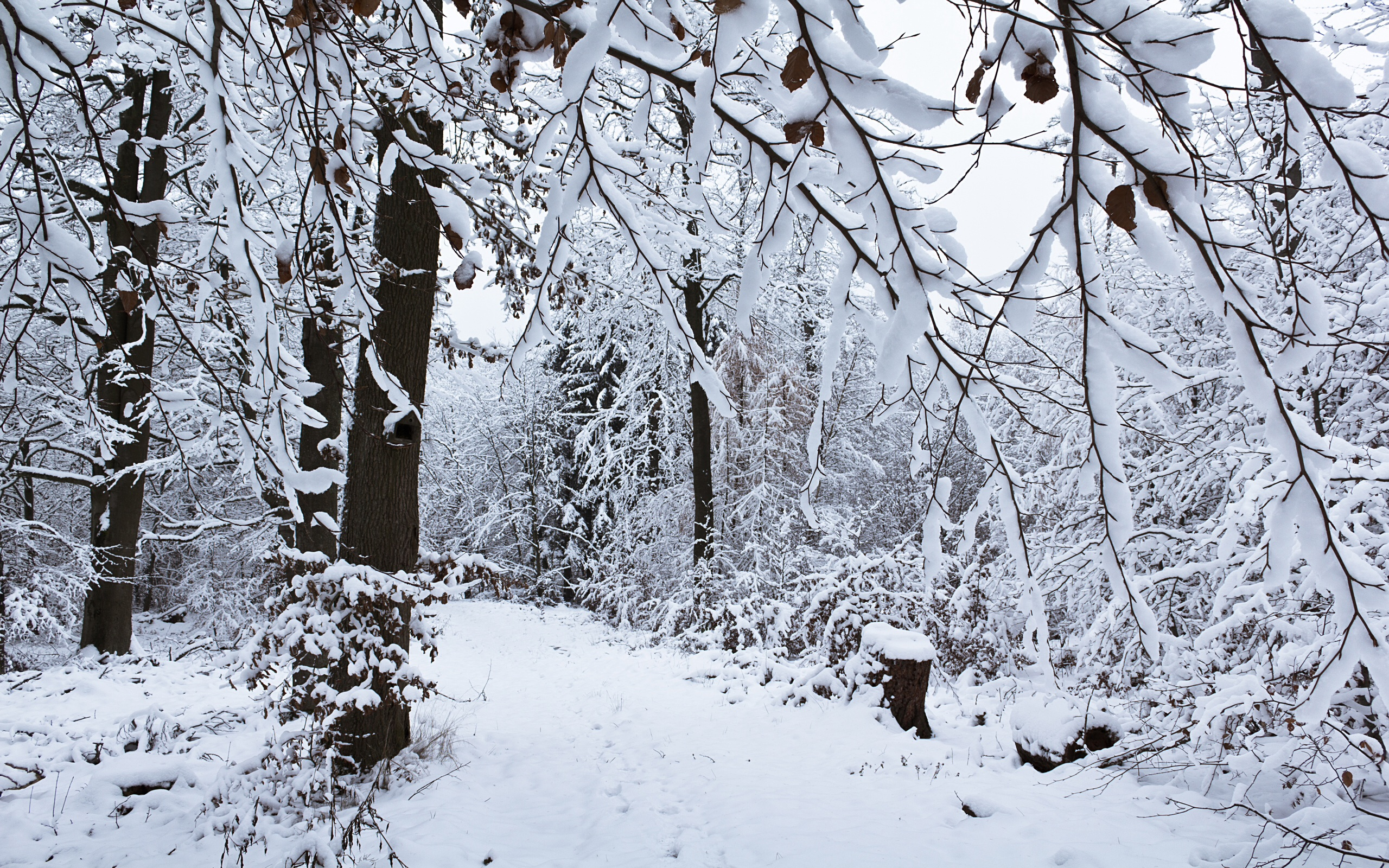 winter forest wallpapers winter forest stock photos