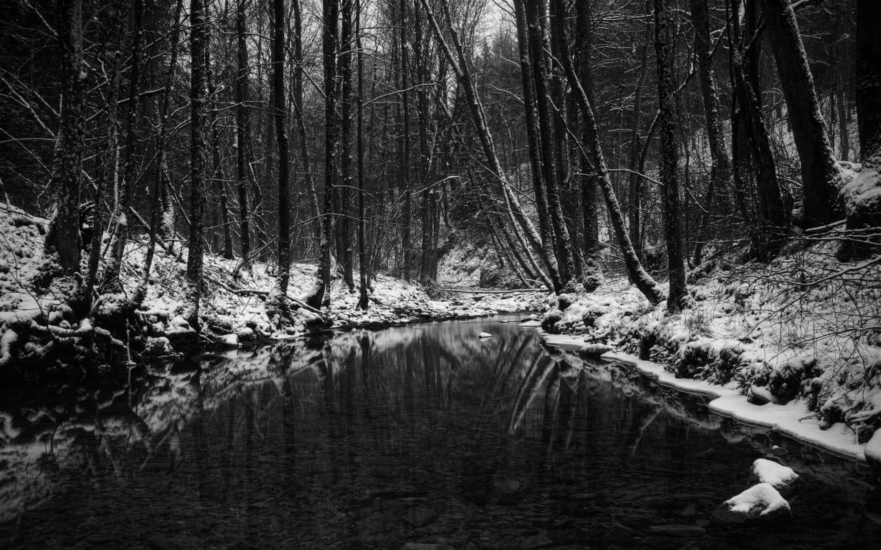 1280x800 Winter In Black And White Desktop Pc And Mac Wallpaper
