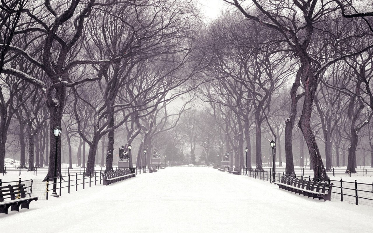1280x800 winter in the park desktop pc and mac wallpaper