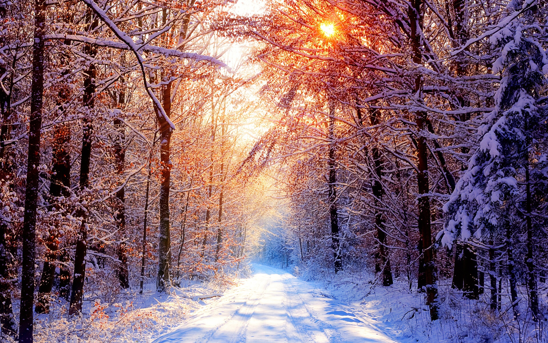 Nature Winter Sun Rays wallpaper