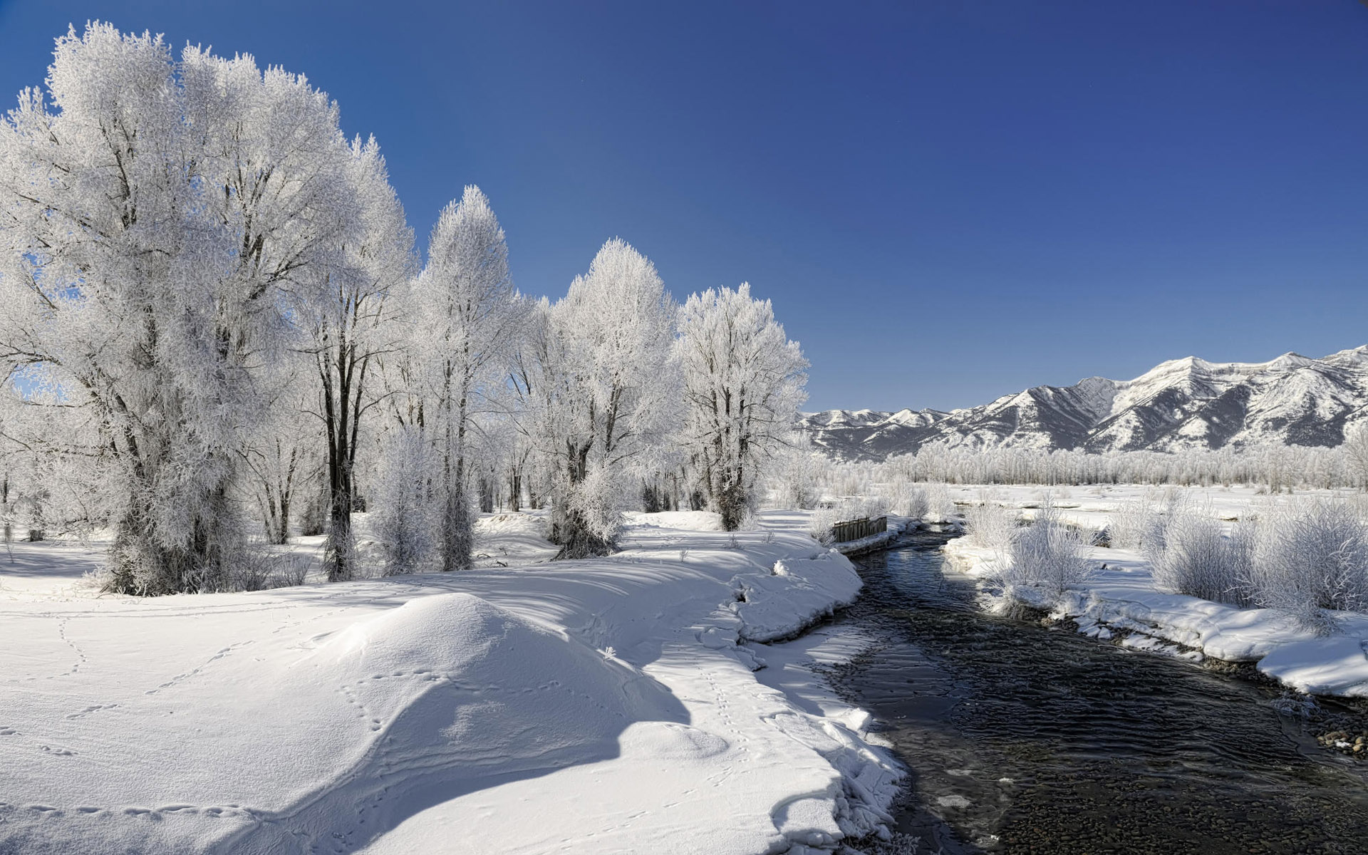Winter trees creek snowy plant wallpapers winter trees creek snowy image winter trees creek snowy plant wallpapers and stock photos voltagebd Image collections