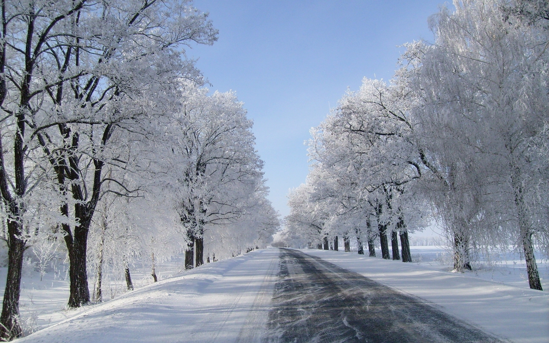 Image Winter Trees Road Fields Snowy Wallpapers And Stock Photos