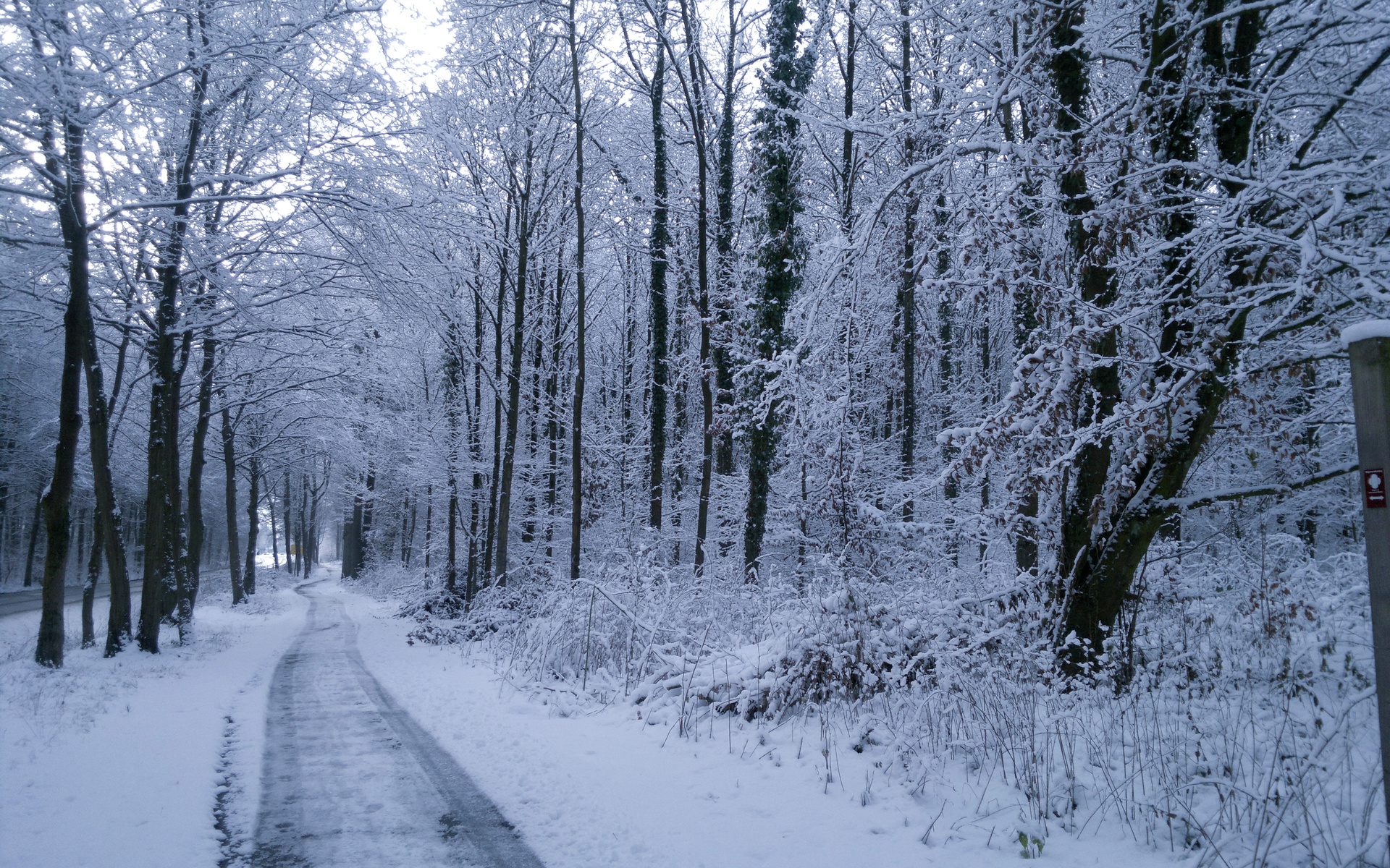 winter trees road plants snow wallpapers winter trees