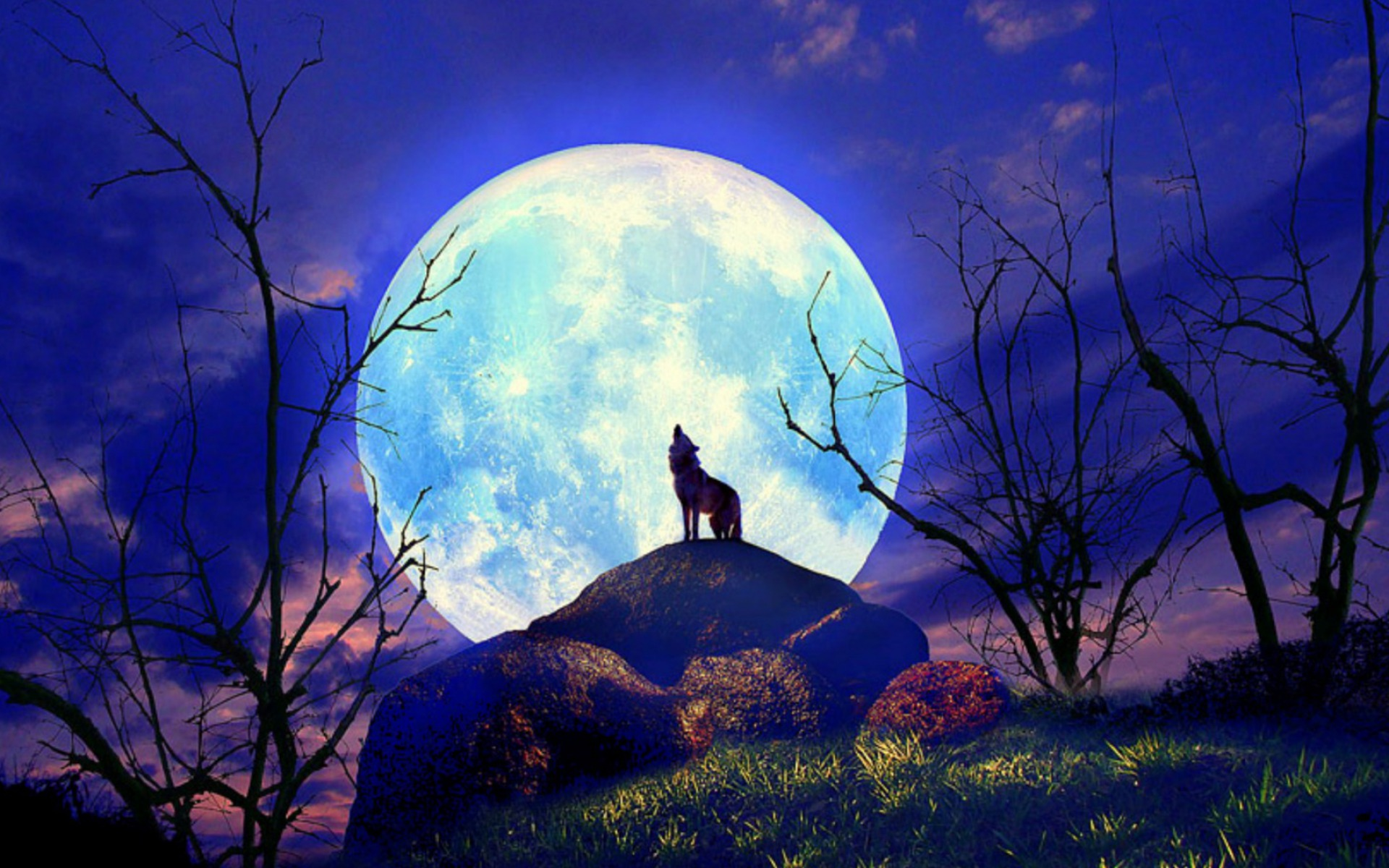 Wolf Nature Full Moon Yelp Wallpapers