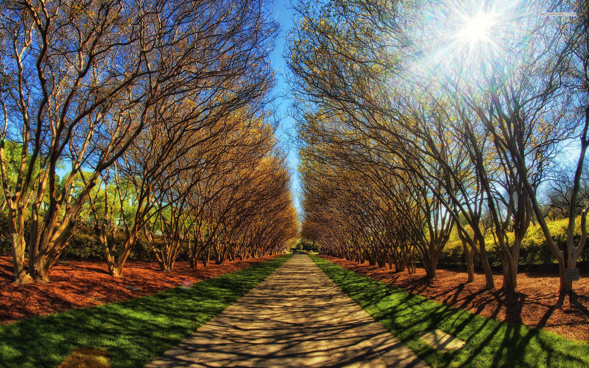 Wonderful Trees Path Sun Light Wallpapers