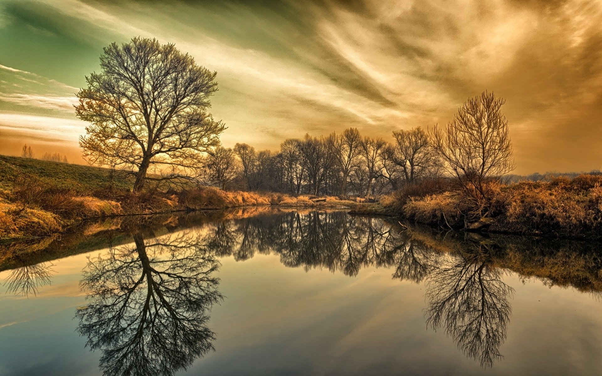 Wonderful Trees Reflection Wallpapers