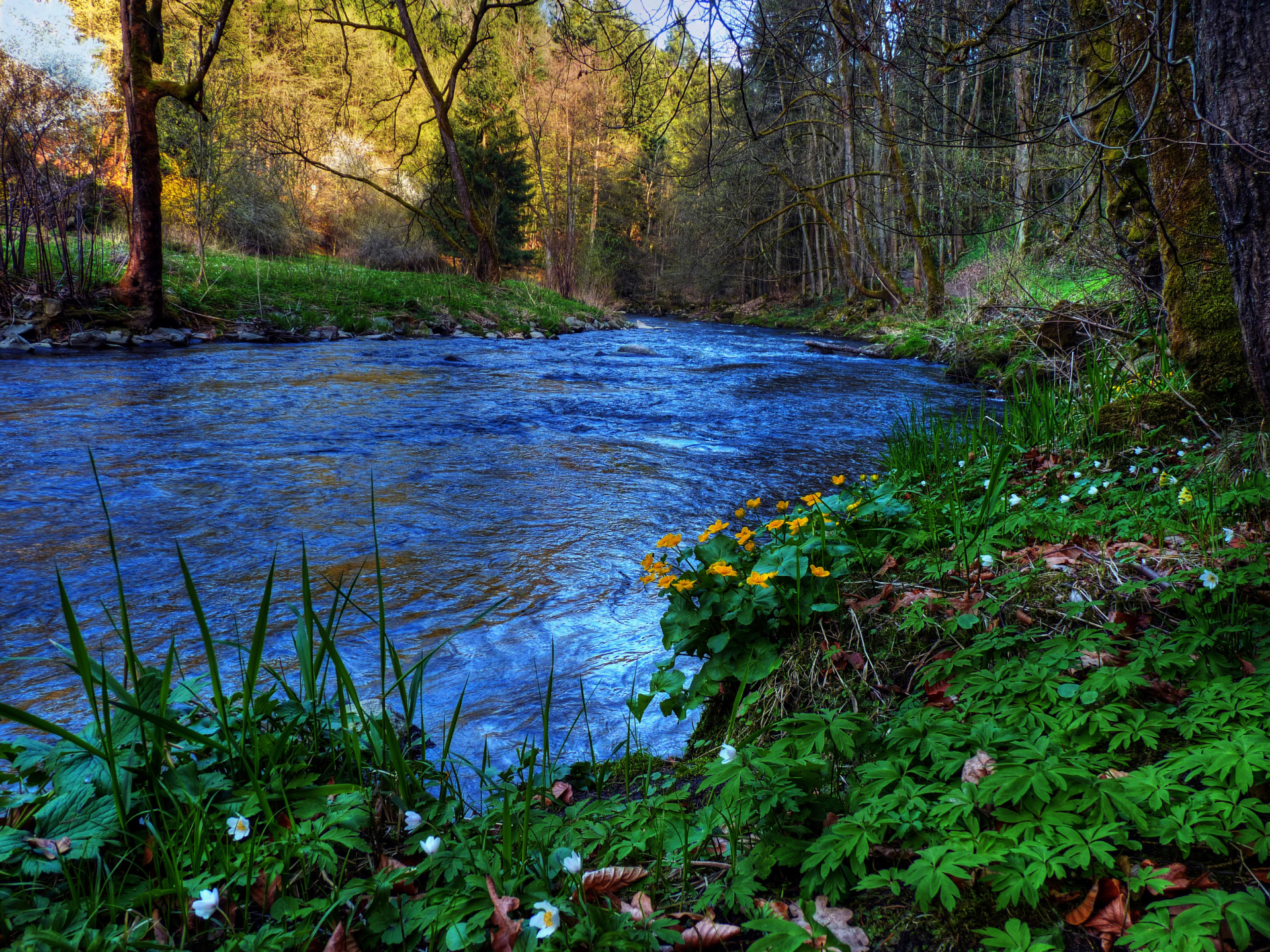 wood pretty blue river plants wallpapers