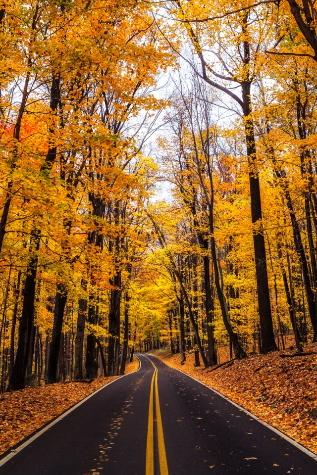640x960 Yellow Autumn Wood Road Leaves Iphone 4 Wallpaper