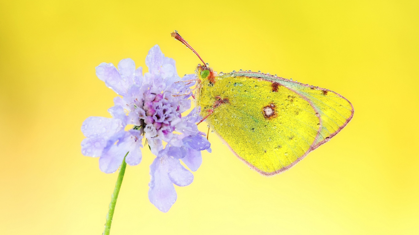 yellow butterfly wallpaper free - photo #16