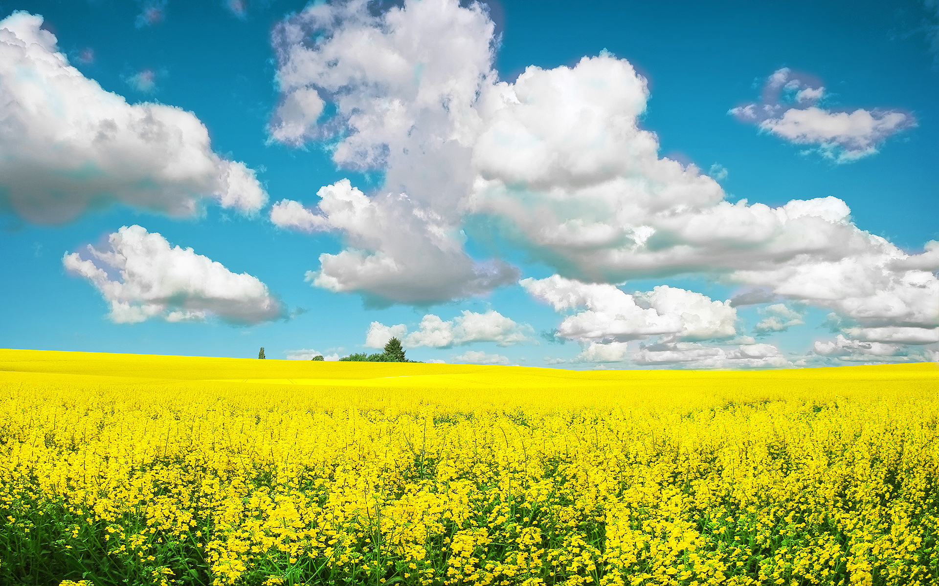 Yellow Field wallpapers | Yellow Field stock photos