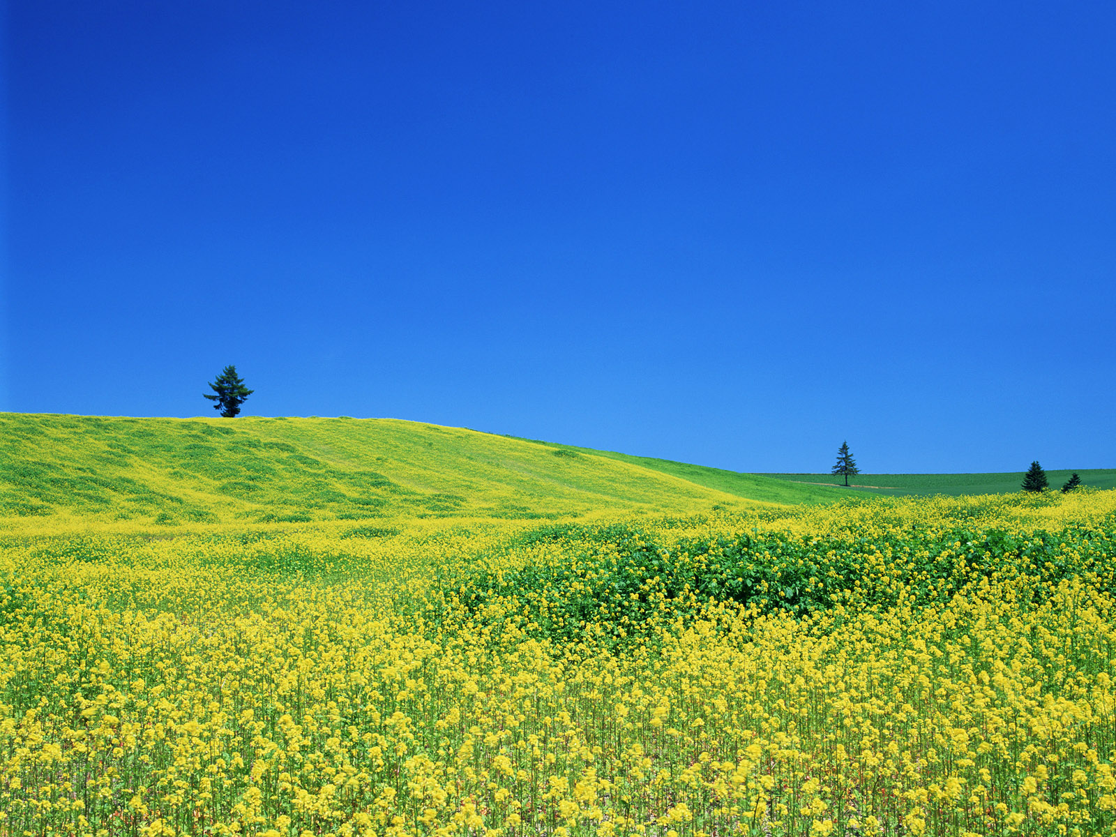 1600x1200 yellow fields desktop pc and mac wallpaper - Desktop wallpaper 1600x1200 ...