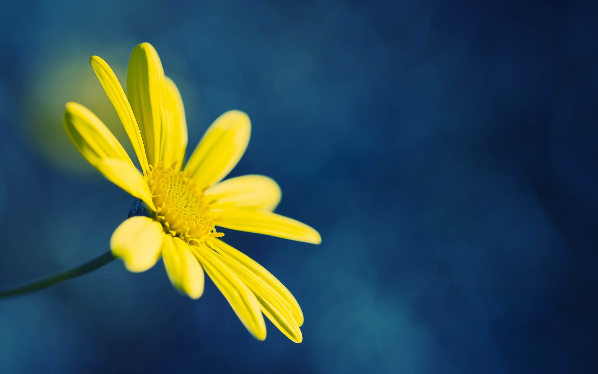 1920x1200 Yellow Flower On Blue Background Desktop Pc And