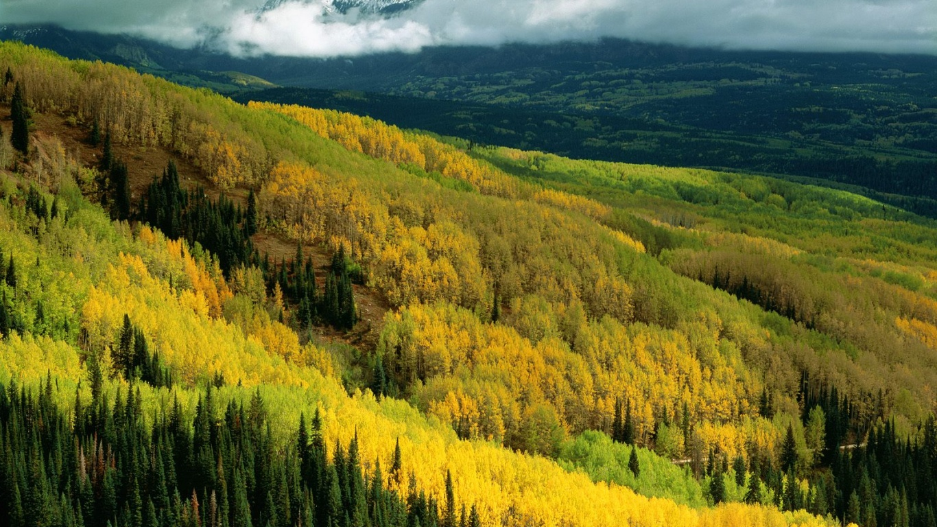 1366x768 Yellow Forest