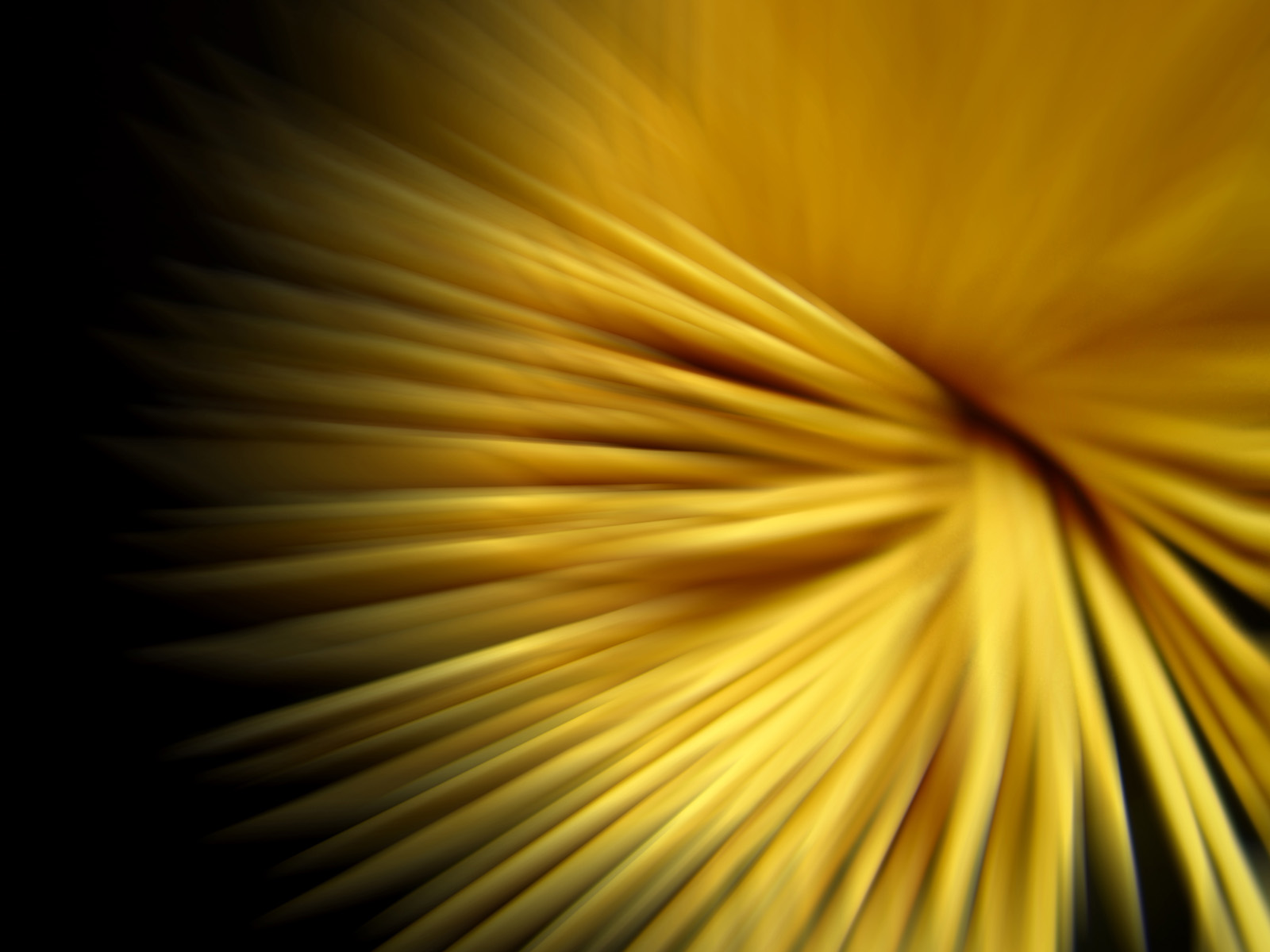 Yellow strings wallpapers
